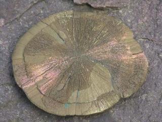 Pyrit Sonnenscheiben